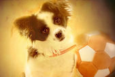 Puppy and old soccer — Stock Photo