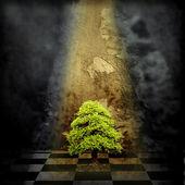 árbol solitario en un cuarto oscuro — Foto de Stock