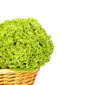 生菜有机耕作白色背景 — 图库照片