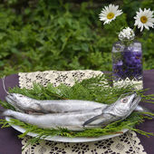 Fresh European hake — Stock Photo