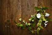 Flowera and wooden wall background — Stock Photo