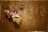 Flower on old wooden background — Stock Photo