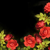Red roses background card — Stock Photo