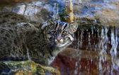 Cane cat — Stock Photo