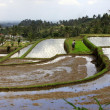Terraced rice — Stock Photo