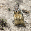 Stock Photo: Cute Eastern Chipmunk