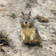 Stock Photo: Cute Chipmunk