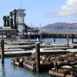 This is PIER 39 and the sea lions — Stock Photo