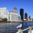 Seagull in city — Stock Photo