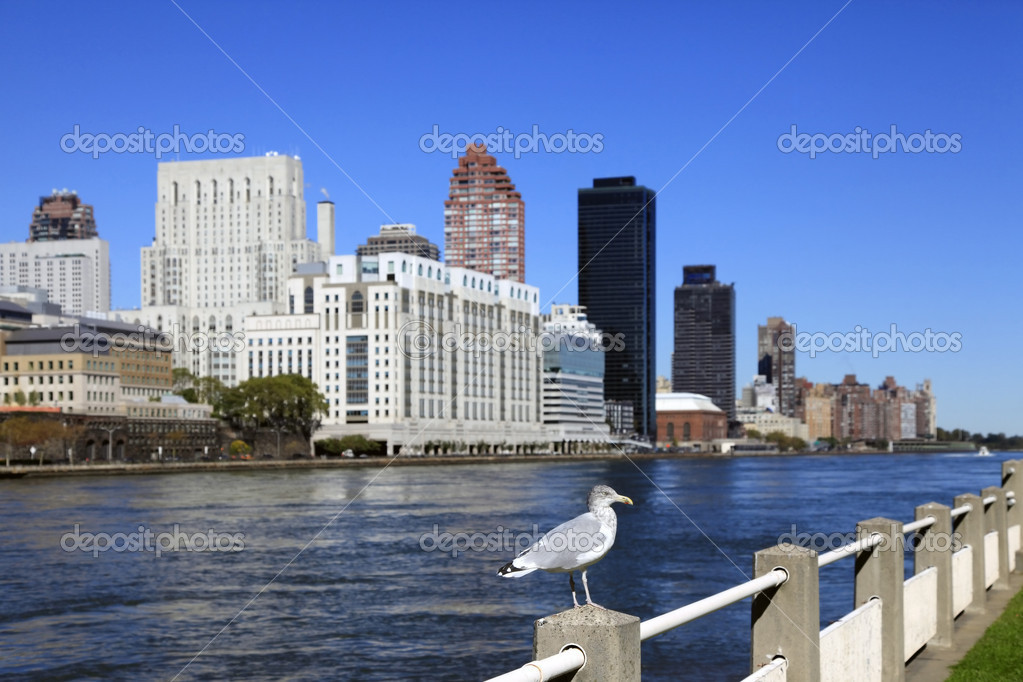Seagull in Manhattan, New York  Stock Photo #16636965