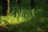 Naturaleza rusa — Foto de Stock