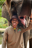 Elephant keeper — Stock Photo