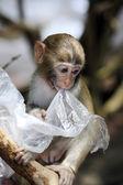Portrait of the sad monkey — Stock Photo