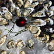 Opened oysters on ice — Stock Photo #35017689
