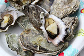 Opened oysters — Stock Photo