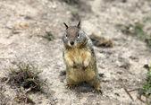 Cute Chipmunk — Stock Photo