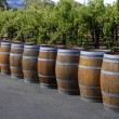 Wine barrels — Stock Photo