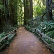 Stock Photo: Muir Woods National Monument