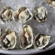 Opened oysters on ice — Stock Photo #39335725