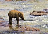 Malý slon — Stock fotografie