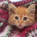 Little red kitten — Stock Photo #49267771