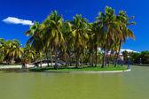 île avec des palmiers — Photo