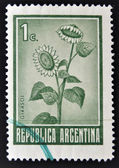 A stamp printed in Argentina shows Sunflower, Helianthus Annuus — Stock Photo