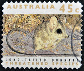 Stamp printed in Australia dedicated to threatened species, shows long-talied dunnart — Stock Photo