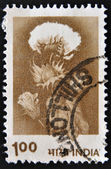A stamp printed in India, shows Hybrid cotton — Stock Photo