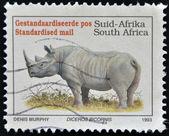 Black rhinoceros, Diceros bicornis — Stock Photo