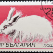 A stamp printed in Bulgaria shows Angora rabbit — Stok fotoğraf