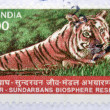 A stamp printed in India shows image of a tiger at Sundarbans Biosphere Reserve — Stock Photo