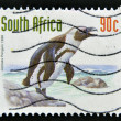A stamp printed in RSA shows jackass penguin — Stock Photo
