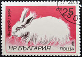 A stamp printed in Bulgaria shows Angora rabbit — Stock Photo