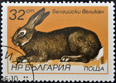 A stamp printed in Bulgaria shows Flemish Giant - Flanders — Foto Stock