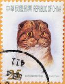 Eine Briefmarke gedruckt in China zeigt scottish fold — Stockfoto