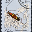 Stock fotografie: Stamp printed in Cubdedicated to Entomofaun(Insect fauna) shows Heterops dimidiata