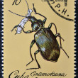 Stock Photo: Stamp printed in Cubdedicated to Entomofaun(Insect fauna) shows Calosombeetle (Calosomsplendida)