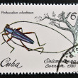 Stock Photo: Stamp printed in Cubdedicated to Entomofaun(Insect fauna) shows Pinthocoelium columbinum