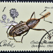 Stock Photo: Stamp printed in Cubdedicated to Entomofaun(Insect fauna) shows Rhinoblita