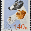 A stamp printed in Hungary shows Foxterrier — Stock Photo