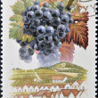 A stamp printed in Hungary shows fruit grape Cabernet sauvignon — Stock Photo