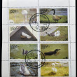 A collection stamps printed in Oman shows a series of eight photographs of waterfowl — Stock Photo
