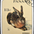 Постер, плакат: A stamp printed in Panama shows the young hare by Albrecht Durer