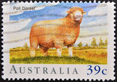 A stamp printed in Australia shows Poll Dorset Sheep — Stok fotoğraf