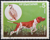 A stamp printed in Bulgaria shows a Pointer and wild grouse — Stock Photo