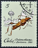 A stamp printed in Cuba dedicated to Entomofauna (Insect fauna) shows Odontocera josemartii — Foto Stock