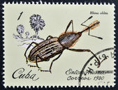 A stamp printed in Cuba dedicated to Entomofauna (Insect fauna) shows Rhina oblita — Foto Stock