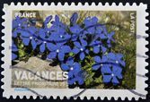 Stamp printed in France shows blue flowers — Foto Stock