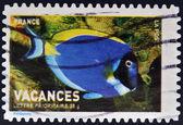 Znaczek wydrukowany we francji pokazuje anioł ryb — Zdjęcie stockowe